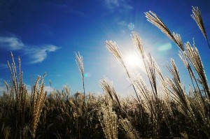 Photo of field, sky, sunlight, countryside, wheat, hay