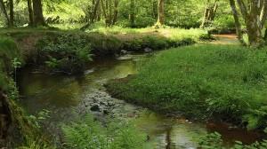 Photo of creek